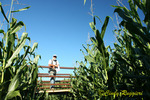Corn Cop at the Corn Maze