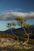 Lone Pine, Adirondack Park, NY, High Peaks Region