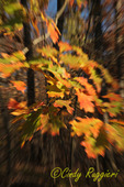 Blurry leaves
