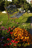 Park Bench and Fall Mums