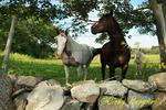 Rhode Island Horse Farm