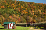 Autumn Hayride