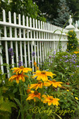 Flowers and Fence, Wickford Rhode Island