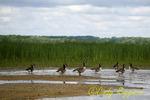 Montezuma National Wildlife Refuge, Seneca Falls, New York, Finger Lakes region