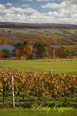 Vineyard overlooking Seneca Lake, Finger Lakes Region, NY