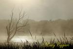 Fog raises over swamp in Dryden NY