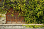 Original building for Taylor Winery, Hammondsport, NY, Ivy covering the wall
