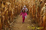 Corn Maze at Stoughton Farm, Newark Valley NY