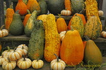 Gourds at the farm stand