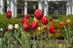 Springtime at Sonnenberg Gardens, Canandaigua New York, Finger Lakes Region