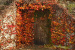 Covered doorway, autumn colors