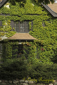 Ivy Covered B&B