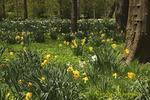 Springtime at Blithewold Gardens, Bristol Rhode Island
