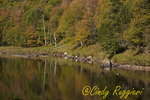 Fly Fisherman, Ausable River, near Wilmington NY, Adirondack Park