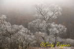 The fog rises, trees are frosted in this early morning scene; November, shoulder season between autumn and winter. Finger Lakes region, closest town is Watkins Glen