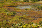 Marsh along Lakeside Drive, Block Island Rhode Island