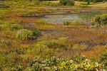 Marsh along Lakeside Drive, Block Island Rhode Island