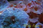 Multi-colored Saltwater mushrooms