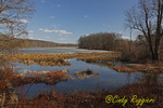 Owego Marsh, end of Winter, March