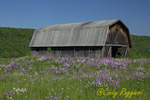 Wildflowers and Barn