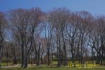 Colt State Park, Bristol, Rhode Island, Spring buds