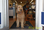 Store Guard Dog