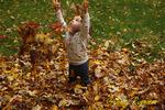 Throwing leaves is great fun