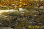Chittenango Creek in Autumn, Central New York