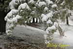 Winter snow, Finger Lakes region, New York