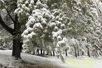 Winter Storm, Finger Lakes region, New York