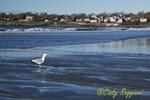 Coastline, Newport Rhode Island