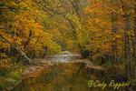 Creek in Autumn, Apalachin, NY