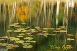 Autumn Reflections, Tioga County, Finger Lakes Region, New York