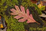Droplets on red leaf