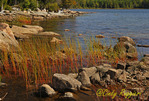 Colorful reeds, Eagle Lake, Acadia National Park, Maine