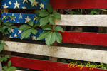 Wooden American Flag, weeds coming through