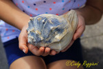 Holding the Conch Shell