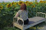 A Sunflower Day