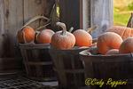 Dusty Pumpkins