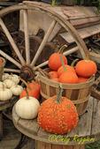 Pumpkins and Wheel