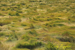 Marsh Grasses at the Rachel Carson National Wildlife Refuge, Wells, Maine