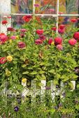 Flower Garden and Artwork