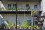 Back Porch Gardening