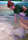 Feeding the stingray, VIA Aquarium, Schenectady NY
