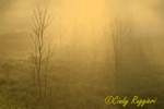Foggy Morning, Red Creek New York