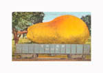 A Carload- A Mammoth Pear From...  1910
