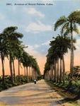 Avenue of Royal Palms, Cuba