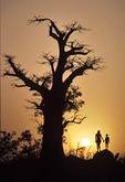 mother and child near baobab tree