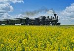 steam locomotive/canola field