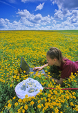 girl using computer in field of trefoil